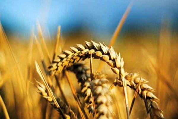 verschil glutenallergie en glutenintolerantie