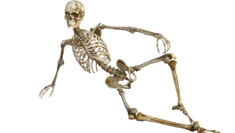 Super Zware botten, kan dat eigenlijk? | I'm a Foodie VE-13